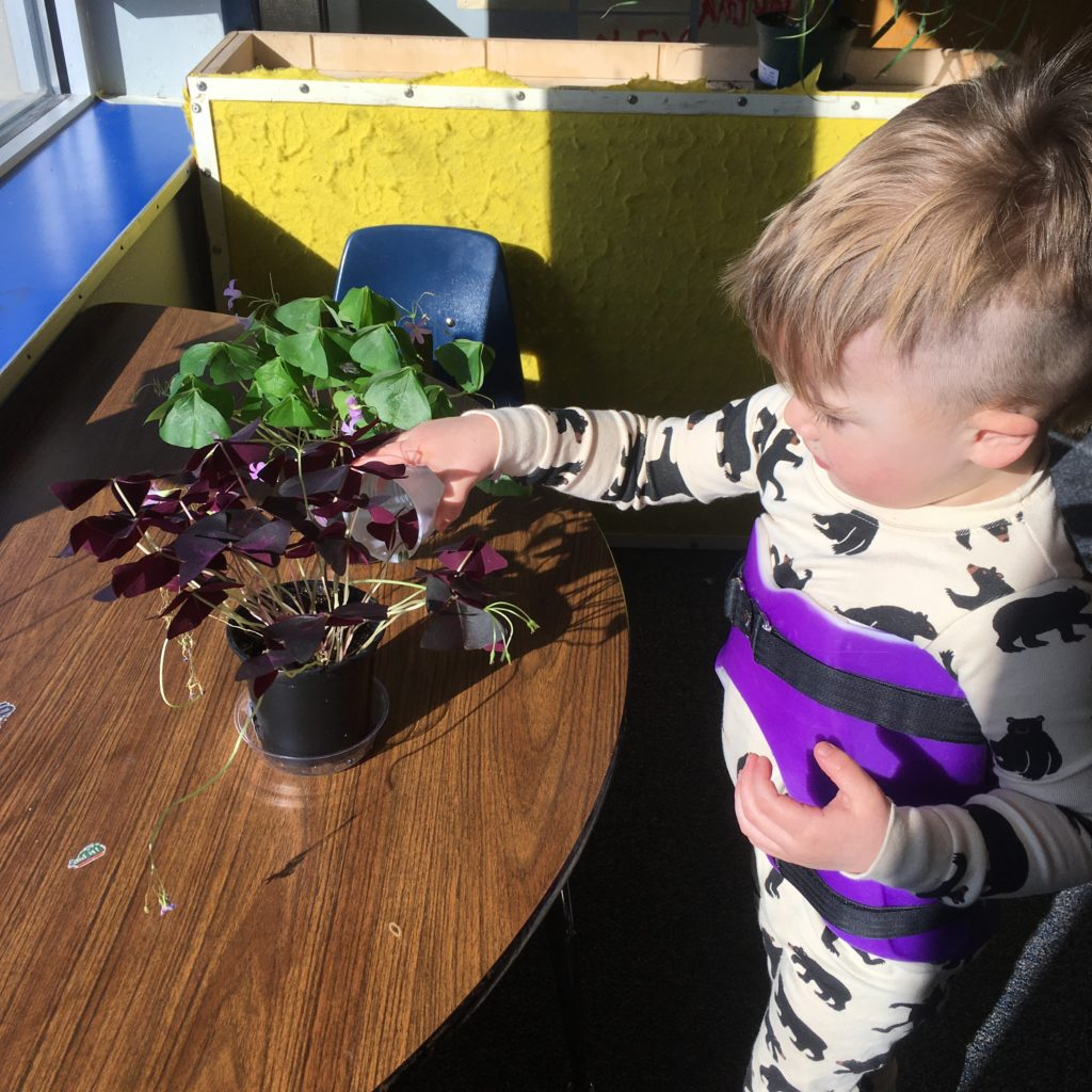 toddler touching plants